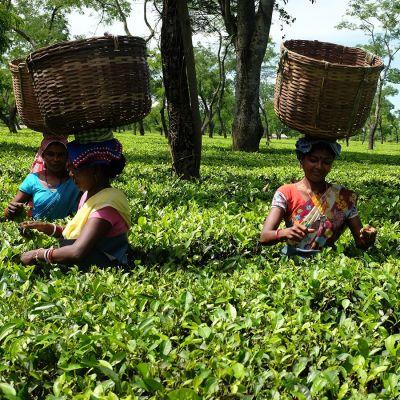 Boot Thee - Assam Ananda Organic - 50 Grams Verpakking
