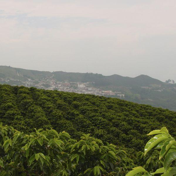 Colombia Mariana Figueroa Dicue C4P - Limited Edition - Espresso