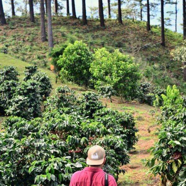 Thailand Doi Chaang Natural Organic Espresso - Limited Edition