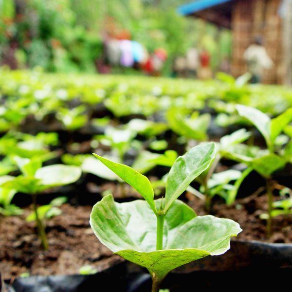 Peru Amazonas Cafeïnevrij Organic Espresso - Sachets Ese Servings Pads - 15 stuks