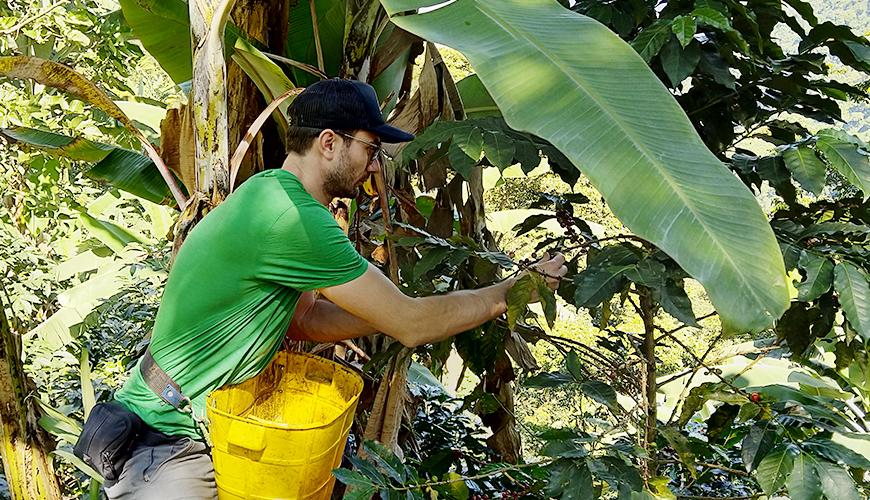 Nieuwe oogst Colombia Kachalu Organic